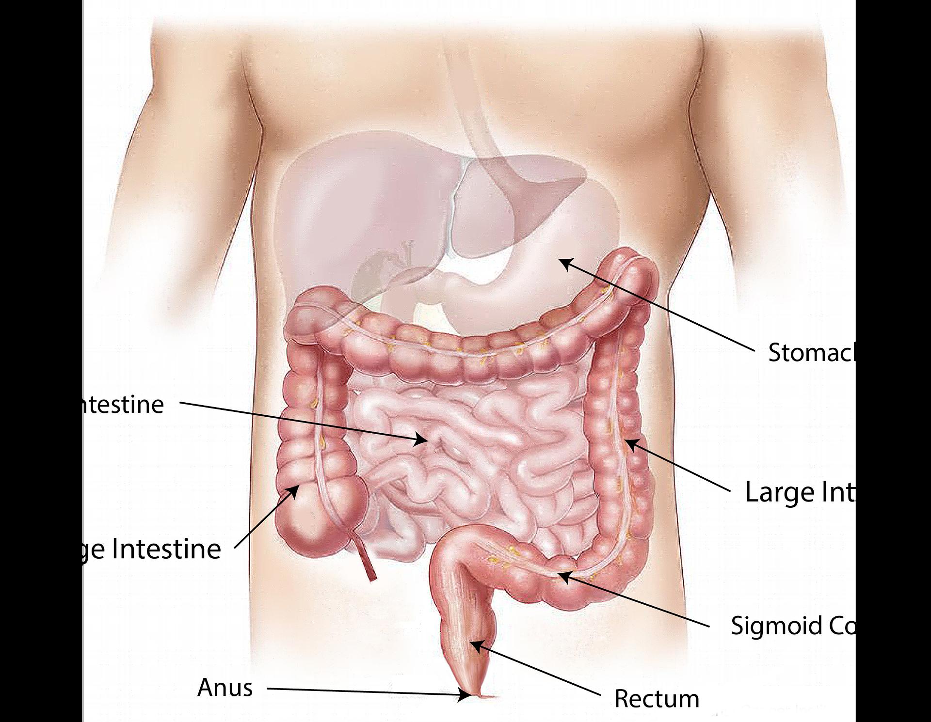 Magen-Darm