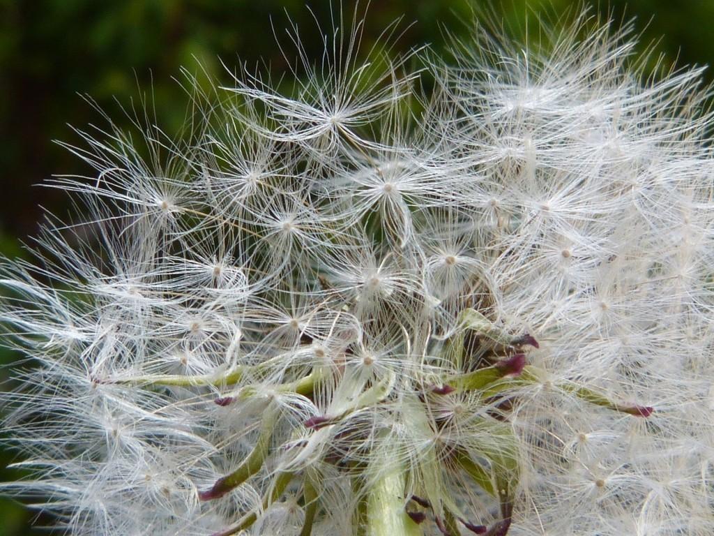 Blütenflug Heuschnupfen